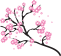 Cherry-Blossoms-2400px